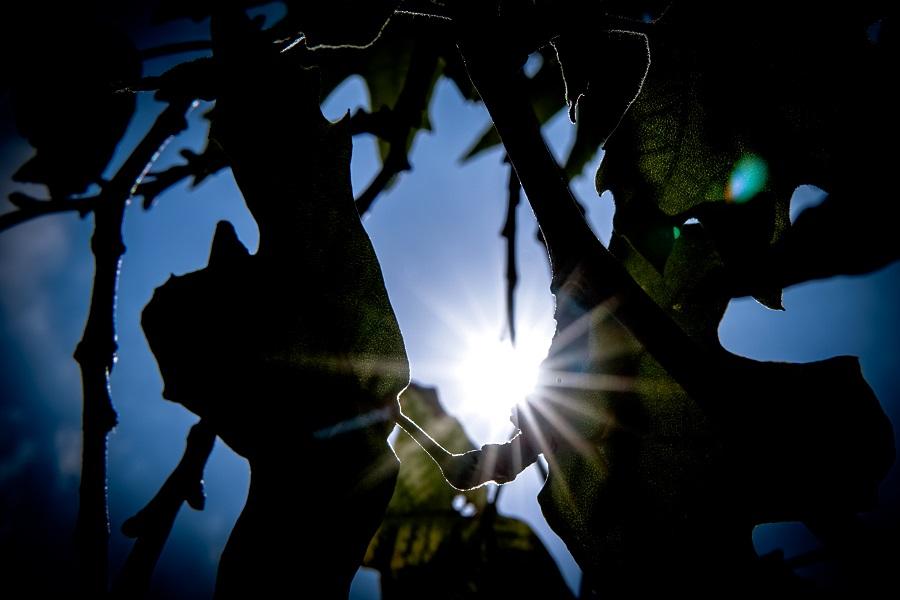 Ο καιρός την Τετάρτη: Καλός ο καιρός σε όλη τη χώρα, με τοπικές μόνο νεφώσεις